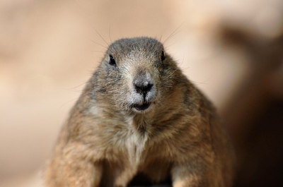 Image: 'Groundhog Day' http://www.flickr.com/photos/34782207@N03/4073373487 Found on flickrcc.net
